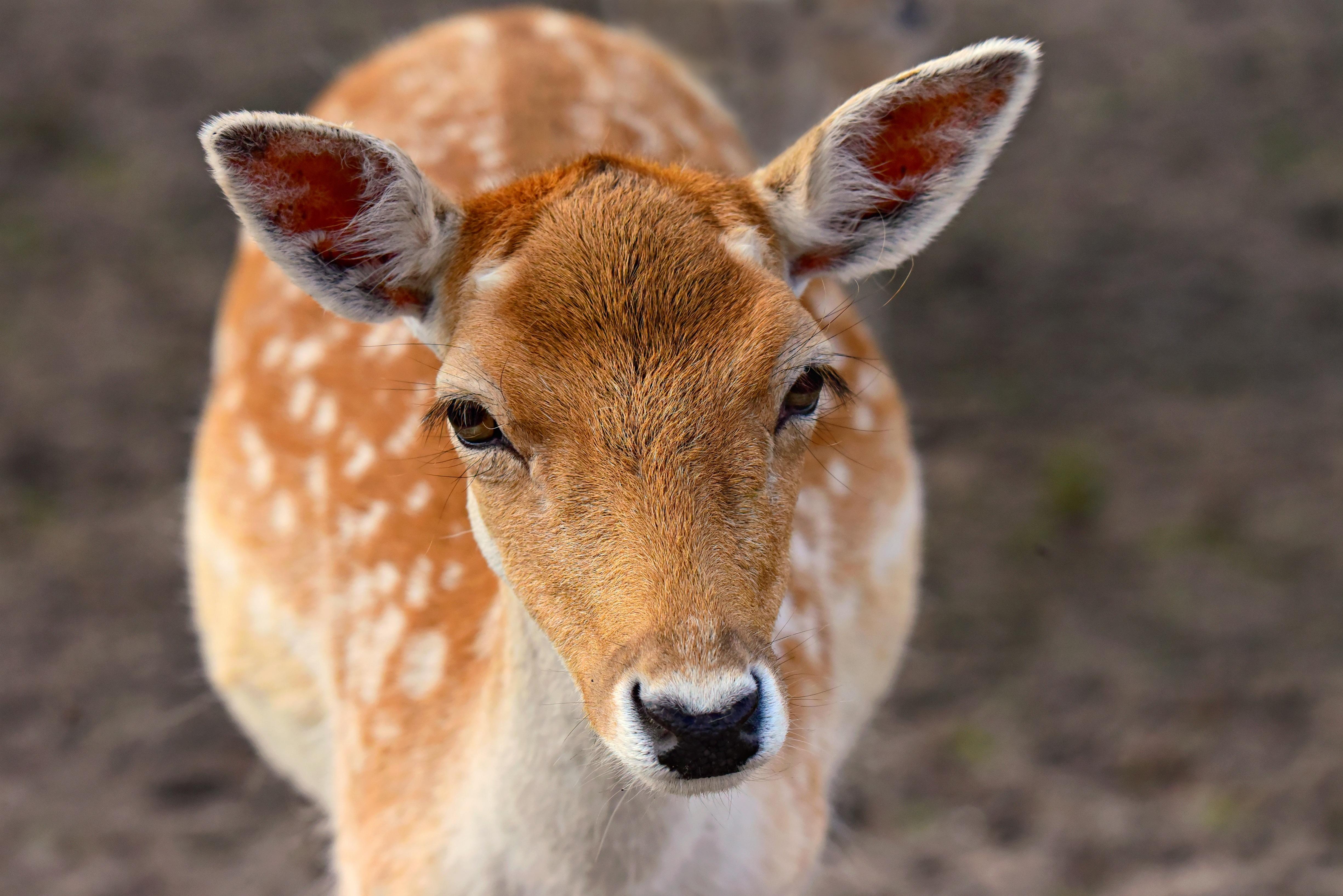 Photo a Deer Closer