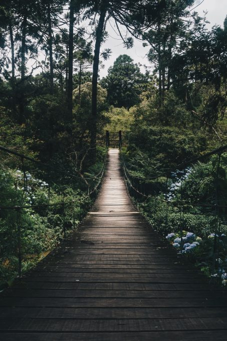 Black wooden hanging bridge surrounded by green forest trees