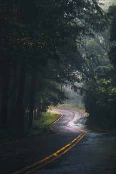 Landscape photography of winding road in a forest