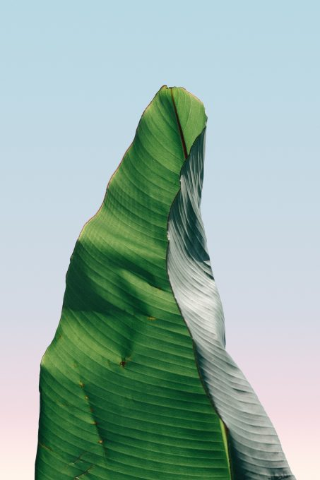 Single palm leaf on a light background