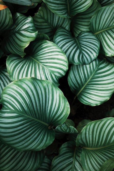 Tropical palm leafs iPhone HD wallpaper