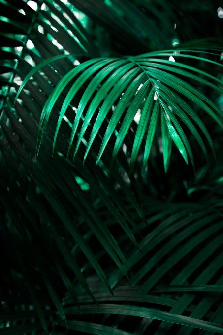 Botanical gardens leafs