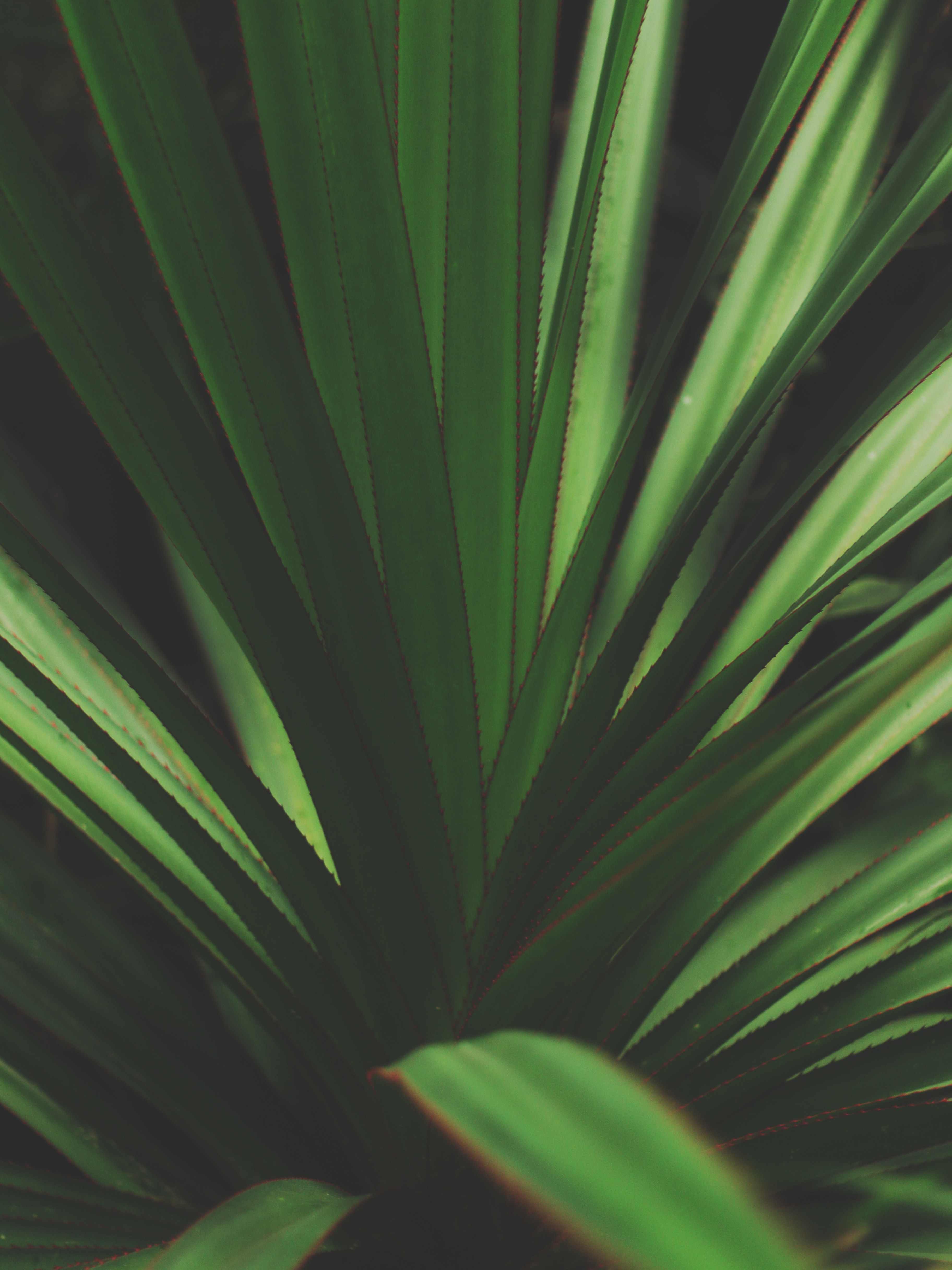 Closeup photo of green plant