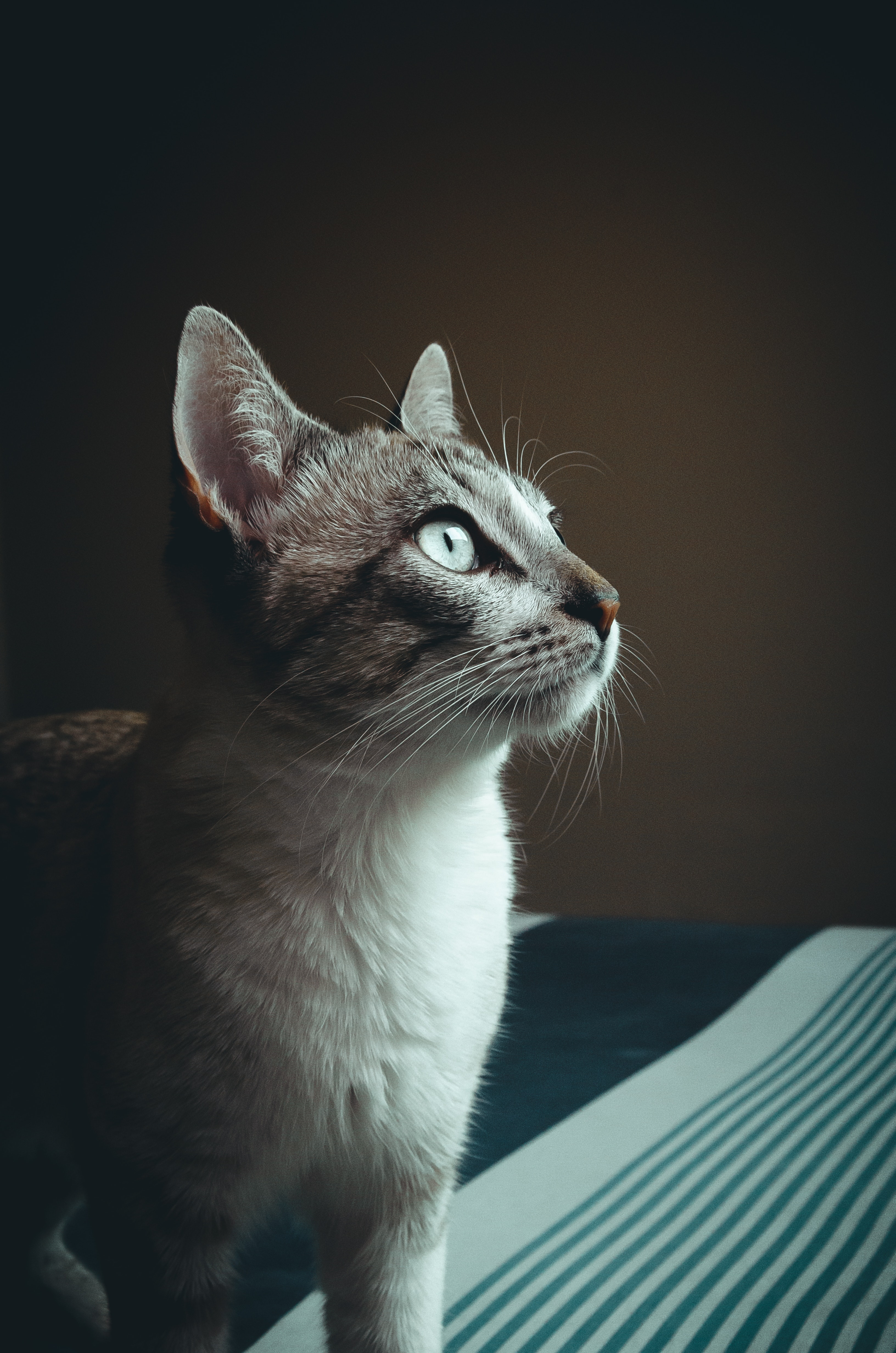 Close-up photography of cat