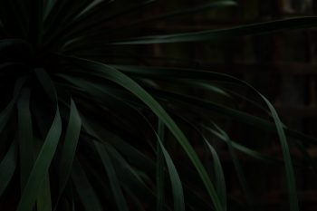 botanical, close-up, dark green, flora, green, pattern, plant, tropical