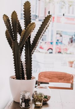 A green cactus in a pot standing on a table