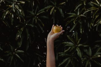 A person holding a yellow apple in front of green plants