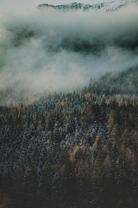 Aerial photo of winter pine forest in fog