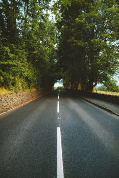 An empty road between trees