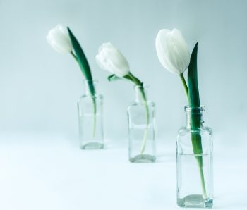 Three white flowers in clear glass bottles