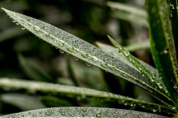Close-up photography of leaves with water droplets