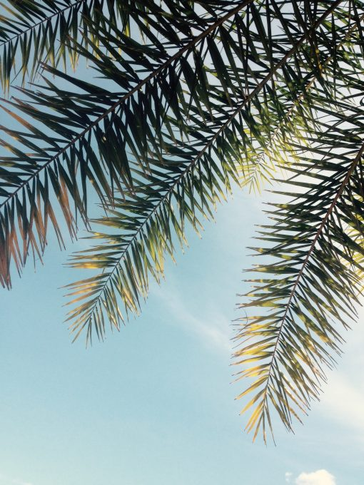 Green palm leaves against the blue sky