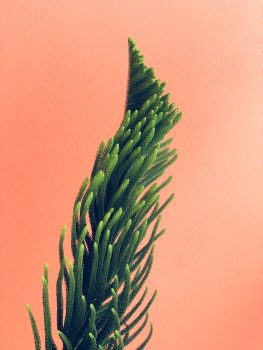 Green plant on a pink wall backdrop