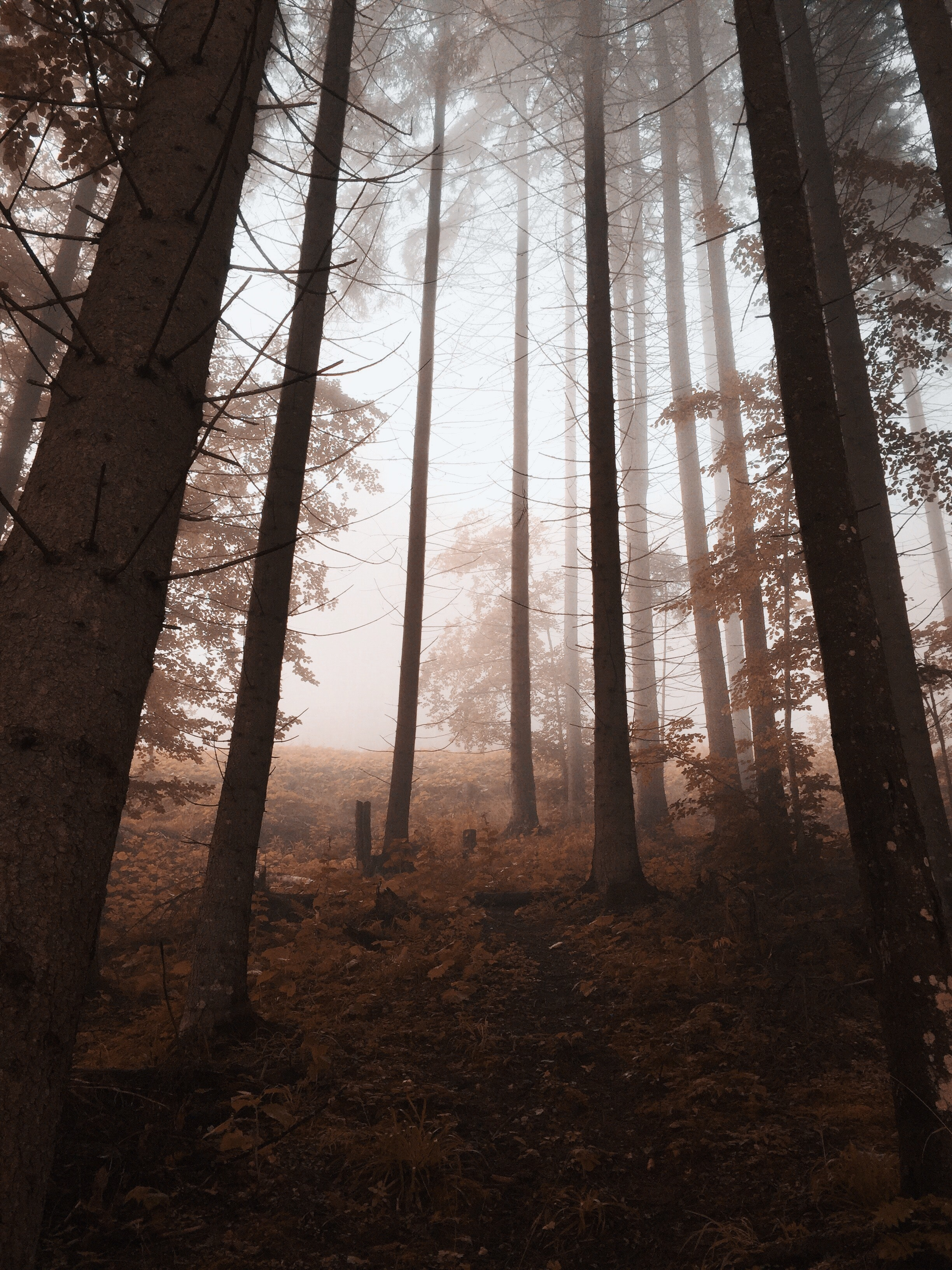 Low angle view of a foggy autumn forest