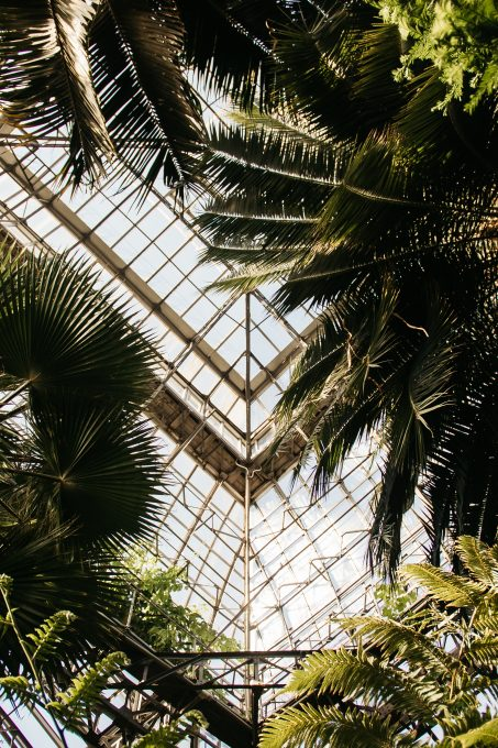 Palm trees inside greenhouse
