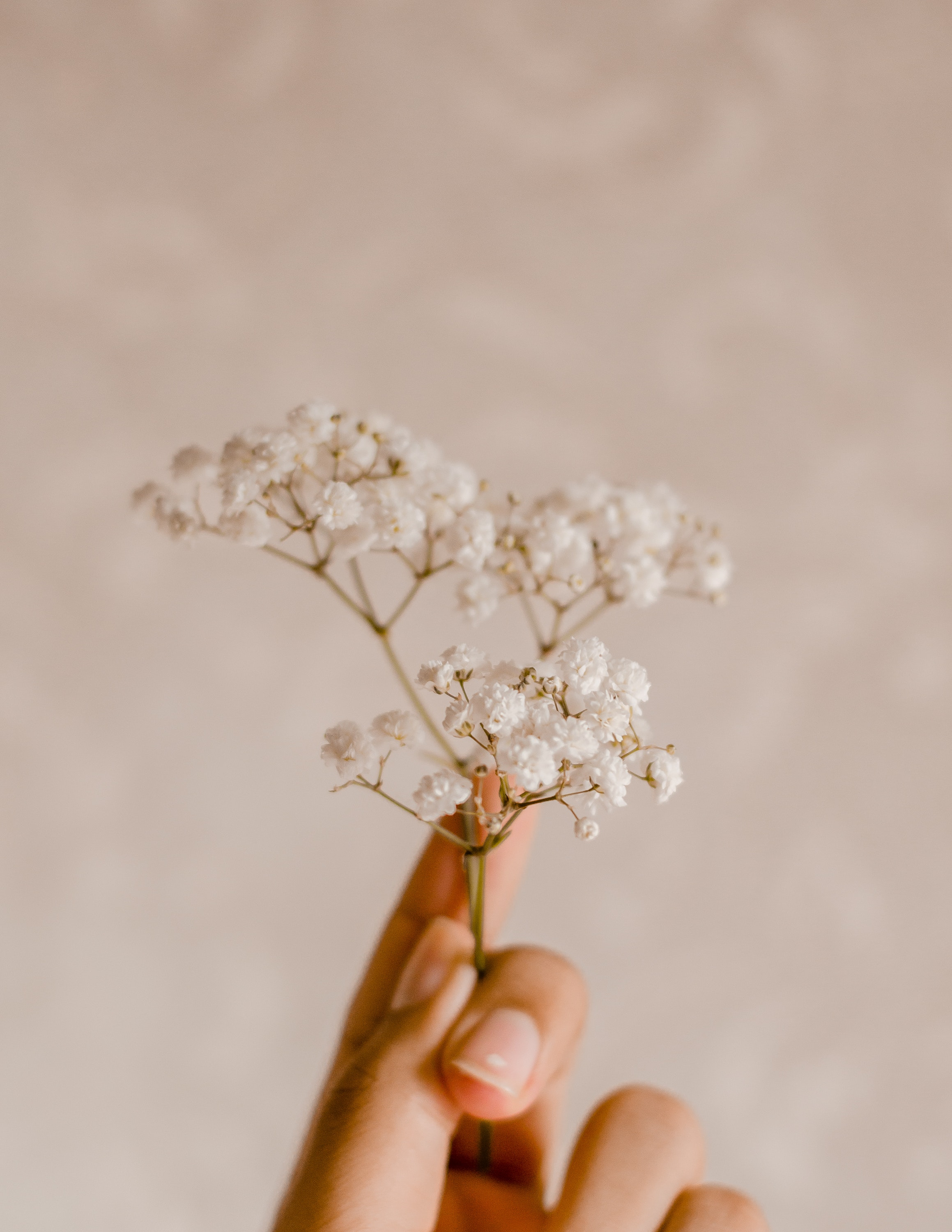 Person's hand holding a white-petaled flower