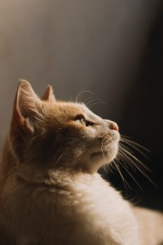 Photo of a ginger cat