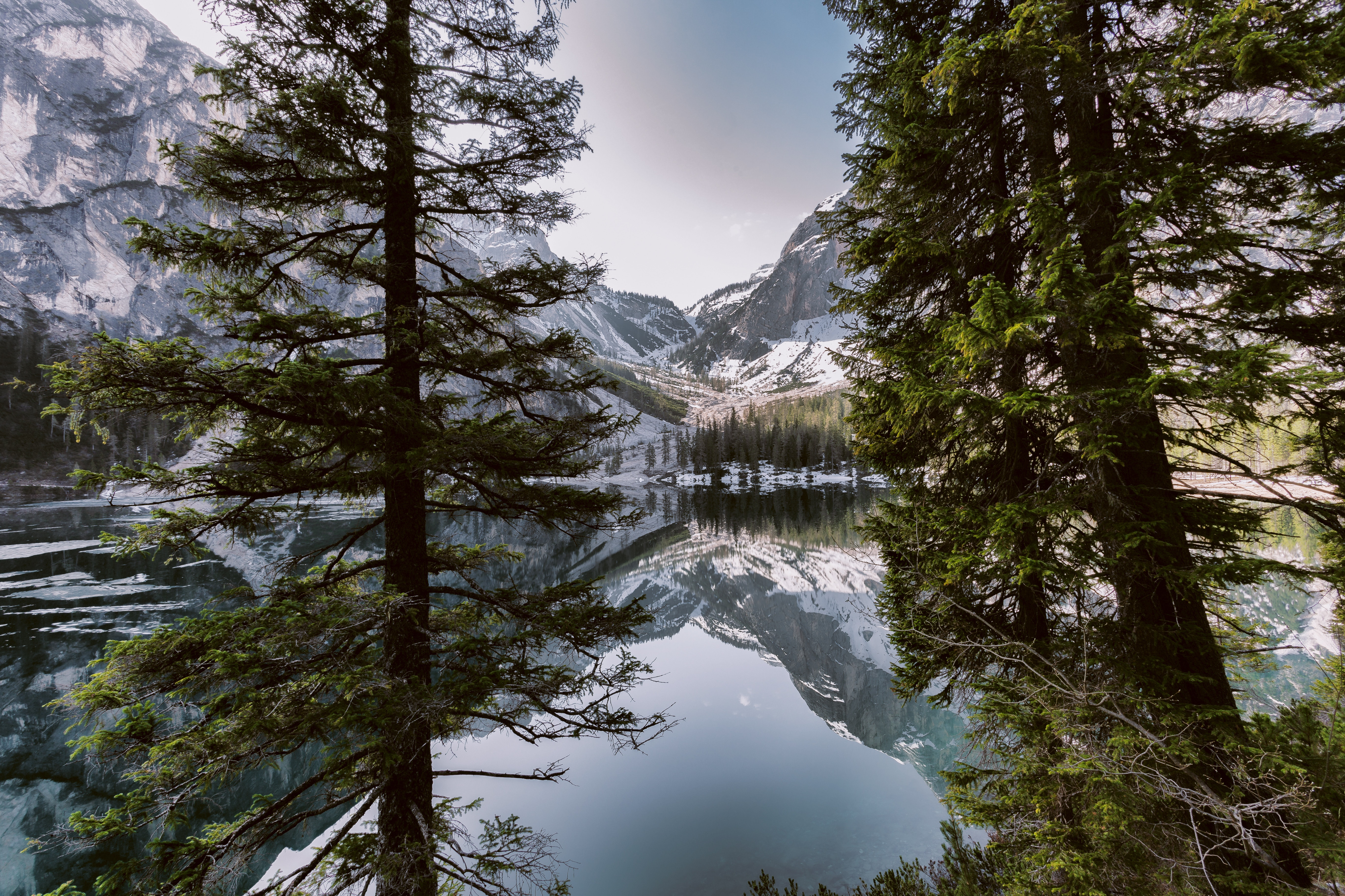 Pines near a body of water and mountain under white skies