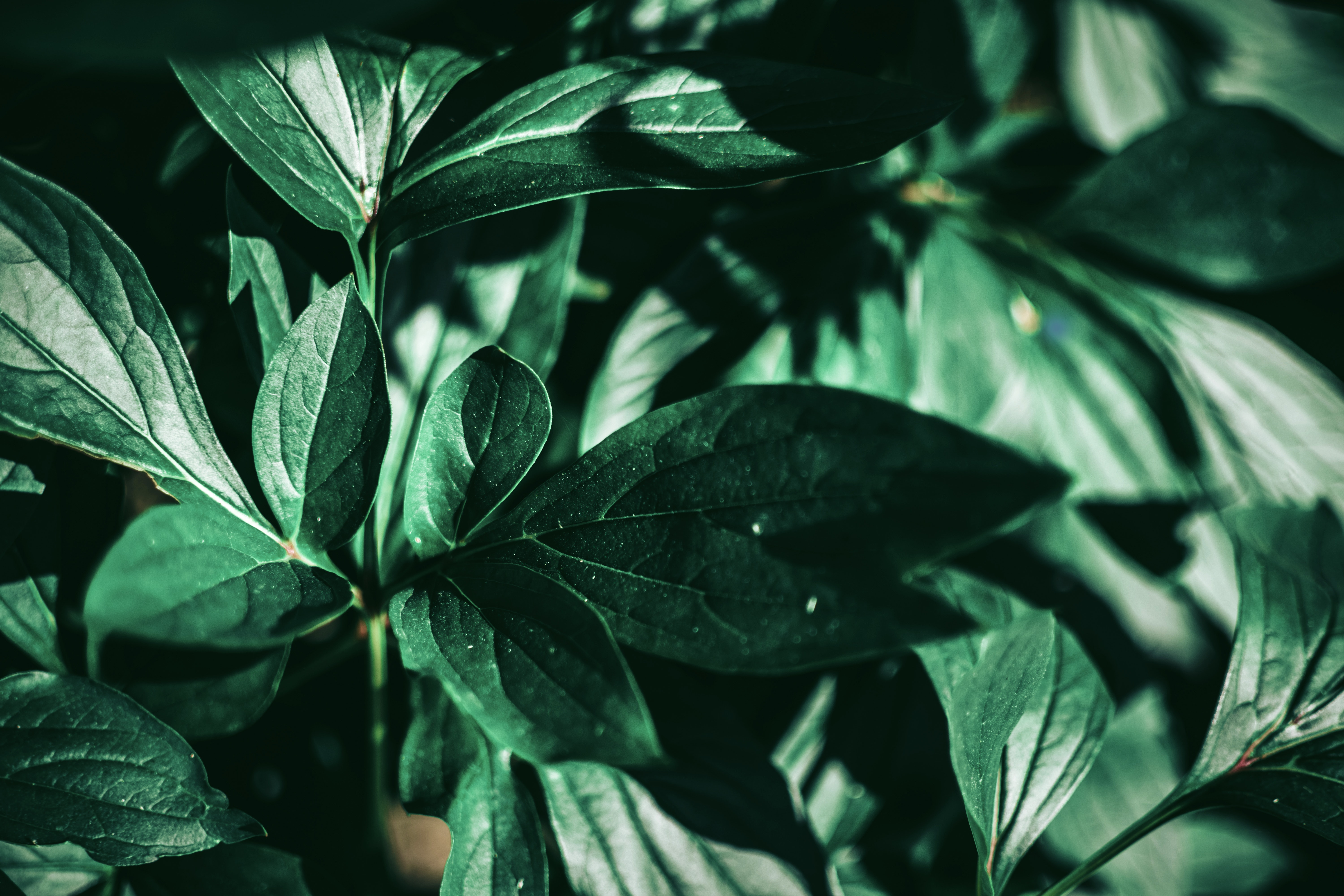 Selective focus photo of a green leafed plant