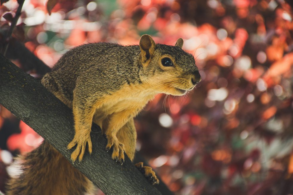 Selective focus photography of a squirrel on a tree branch