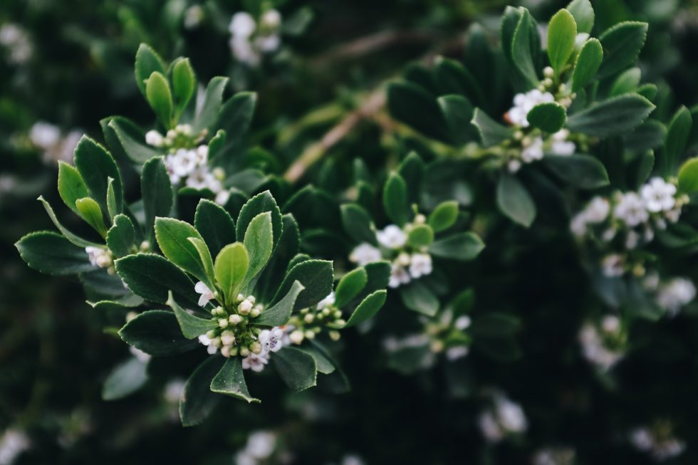 Selective focus photography of white blossom