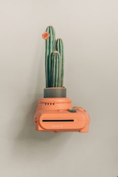 A green cactus plant on an orange camera