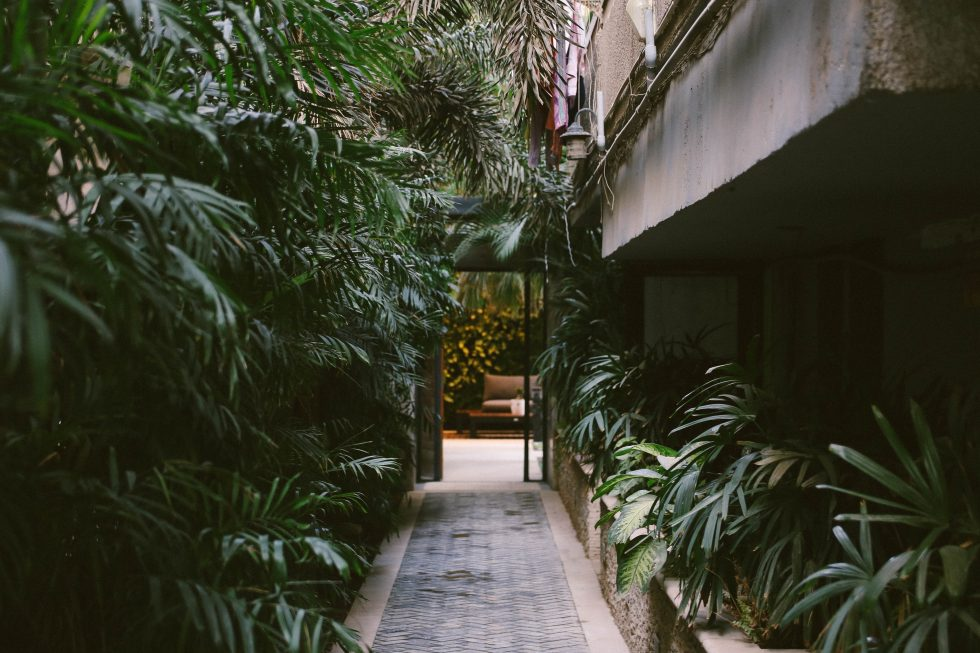 A pathway in the middle of linear leaf plants