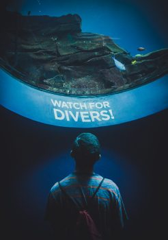 A person watching for fishes through a round aquarium window