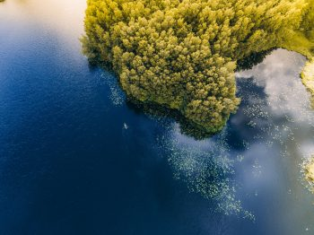 Bird's eye view of trees near the body of water