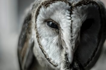 Close-up photo of an owl