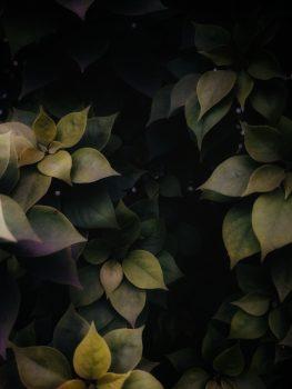 Photo of a green leaf plant