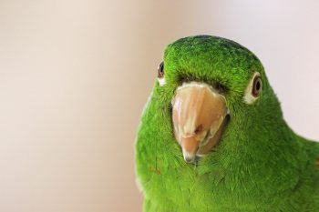 Selective focus photo of a green parrot