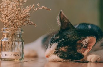 Selective focus photography of a cat lying next to a glass jar