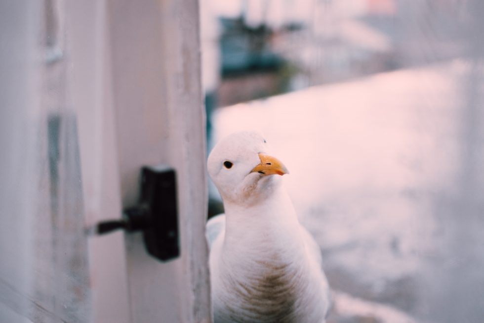 Selective focus photography of a seagull beside a window