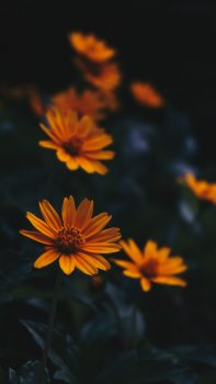Selective focus photography of orange flowers