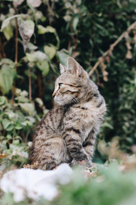 Shallow focus photography of a tabby kitten