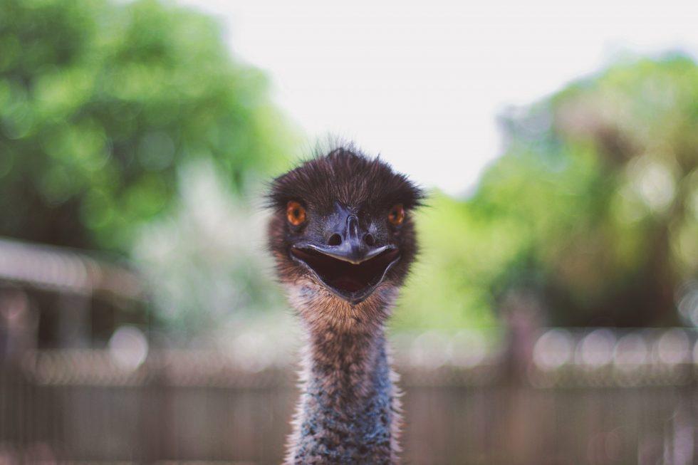 Shallow focus photography of an ostrich head