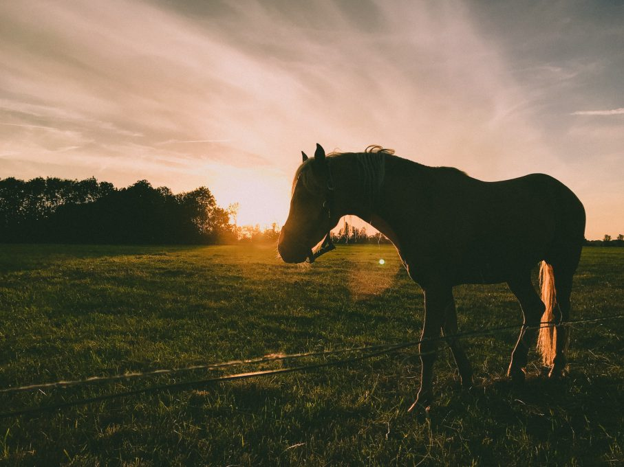 Silhouette photography of a horse during sunrise