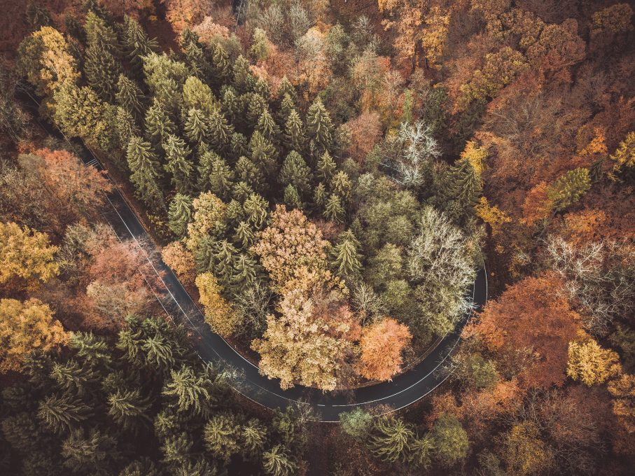 Bird's eye view of a curved road among trees