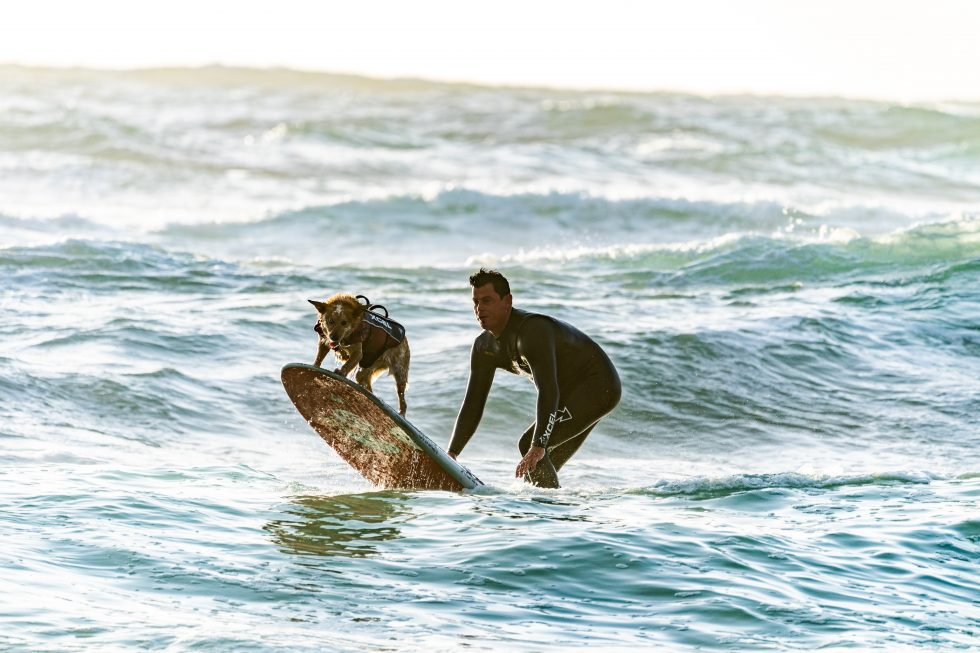 A surfer and his dog on a surfboard