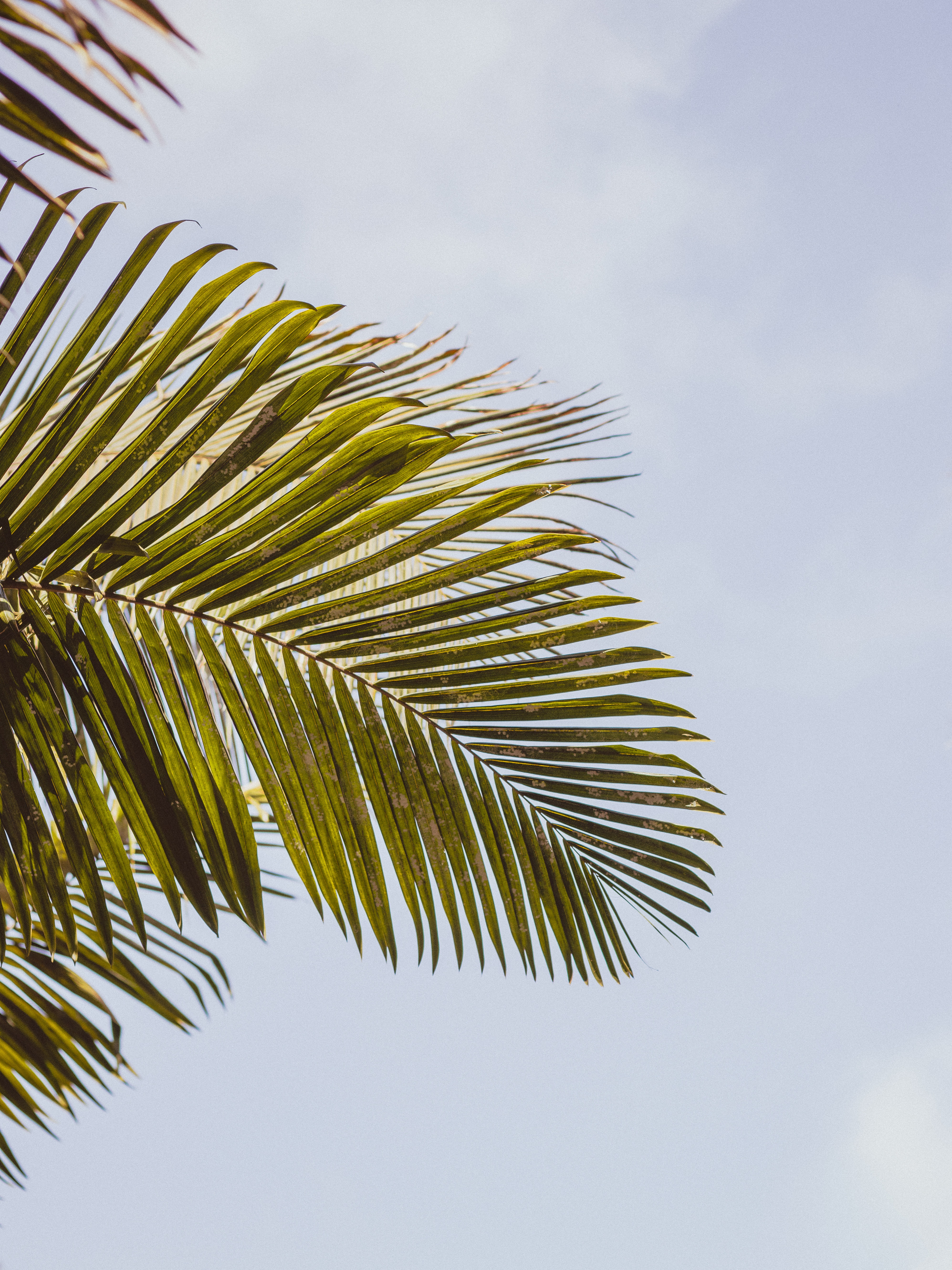 A green palm tree leaf against the blue sky