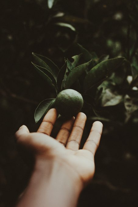 A person holding a green citrus fruit