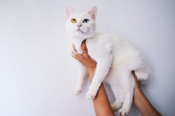 A person holding a white cat