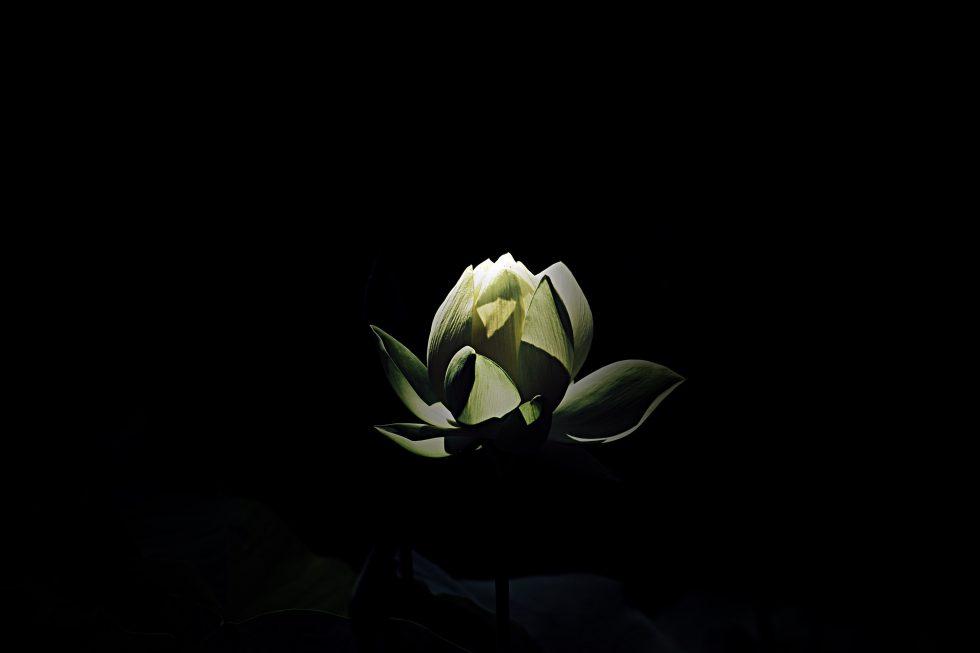 A white petaled flower