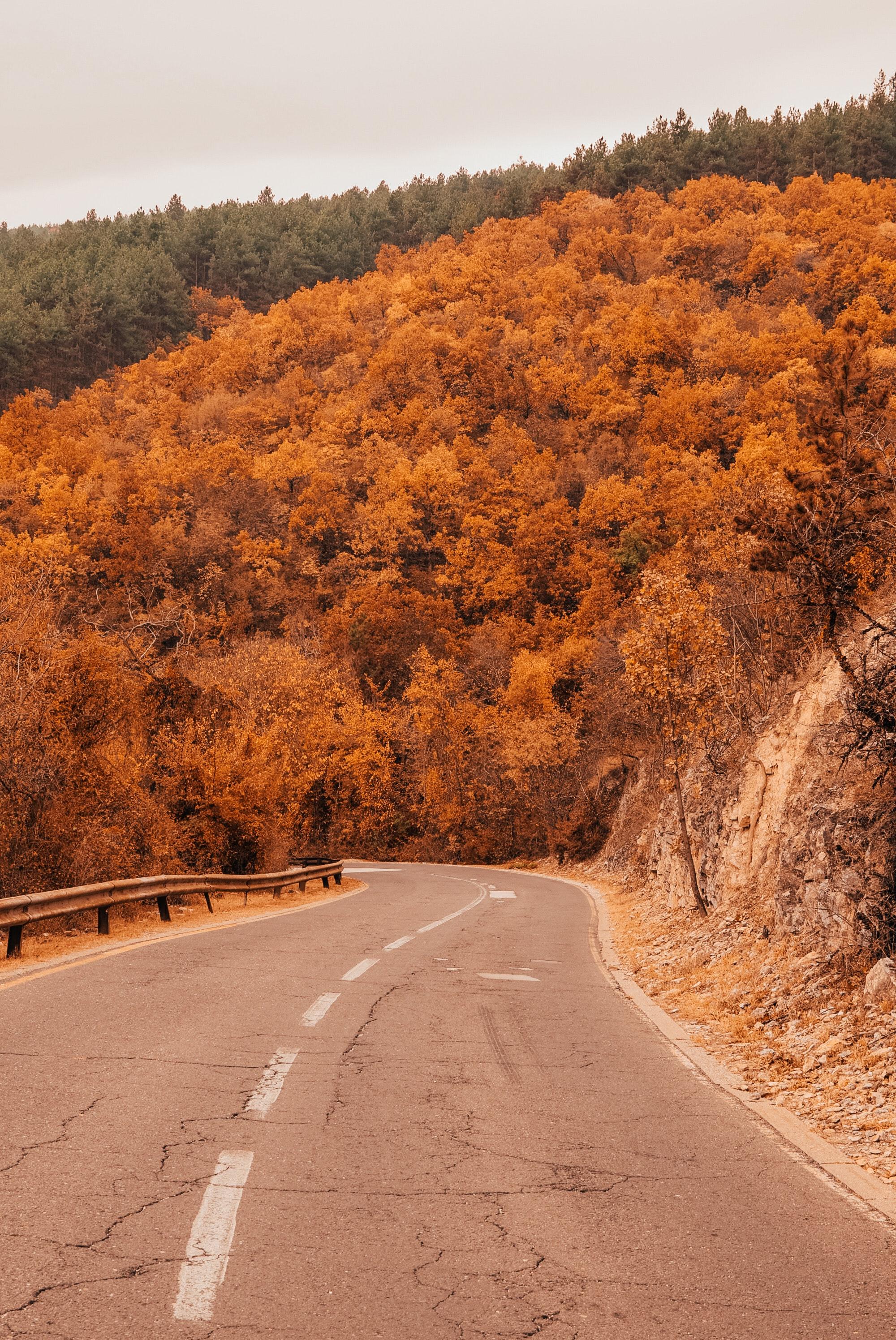 Asphalt road along the autumn forest on a hill