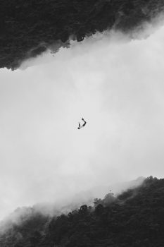 Black and white photo of a person falling in a foggy tropical forest