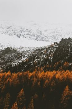 Brown trees on mountains
