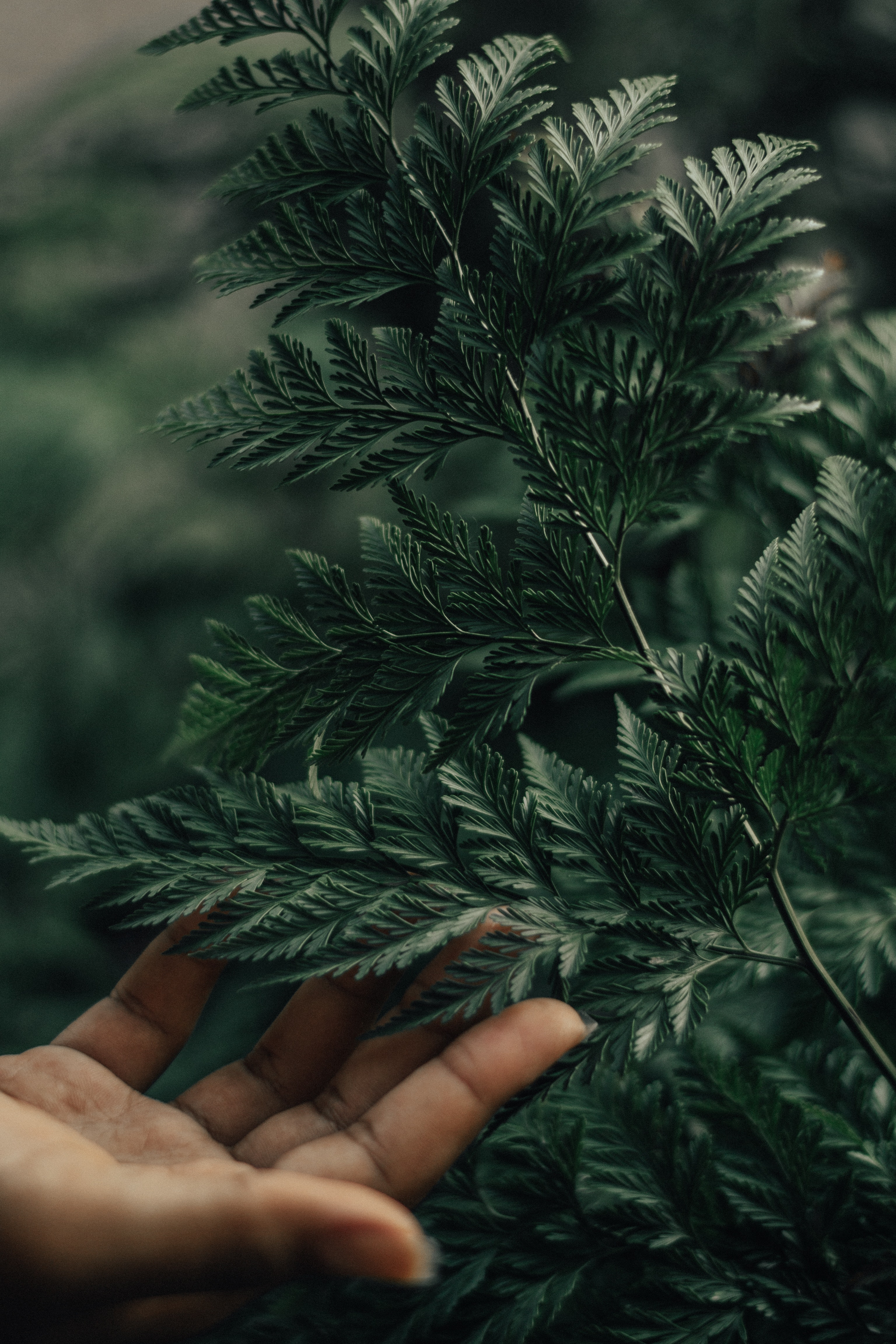 Close-up photo of a person touching green leaves