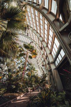 Plants inside a building