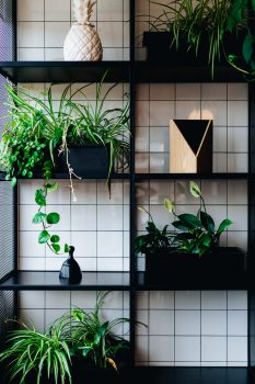 Potted plants standing on black wall shelves